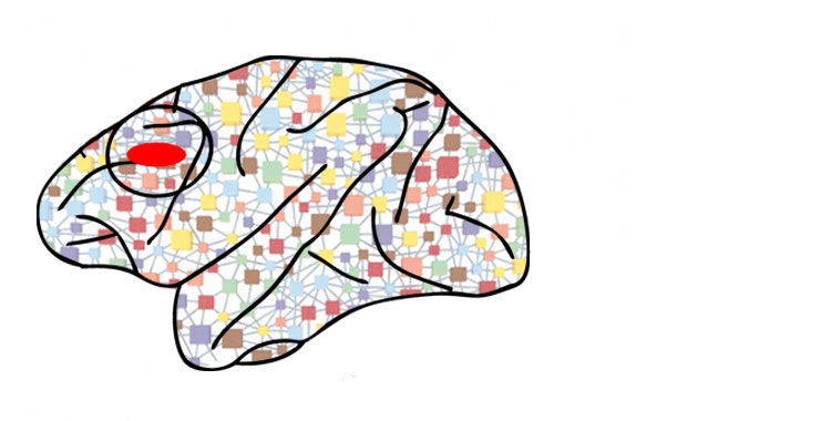 Uncovering the Brain Circuitry of Short Term Memory