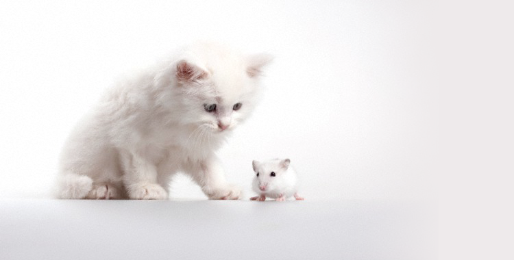 Fatal Attraction: The Cat-and-Mouse Story with a Twist