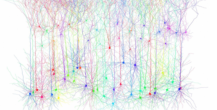 Connectomics: Mapping the Brain