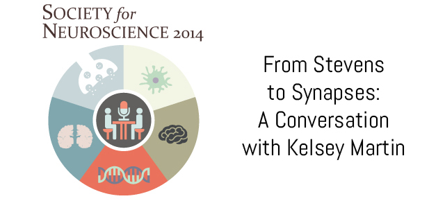 From Stevens to Synapses: A Conversation with Kelsey Martin