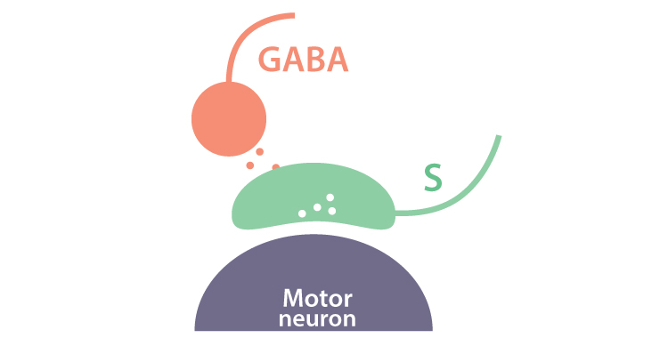Smooth Move: How GABAergic Interneurons Regulate Skilled Motor Behavior