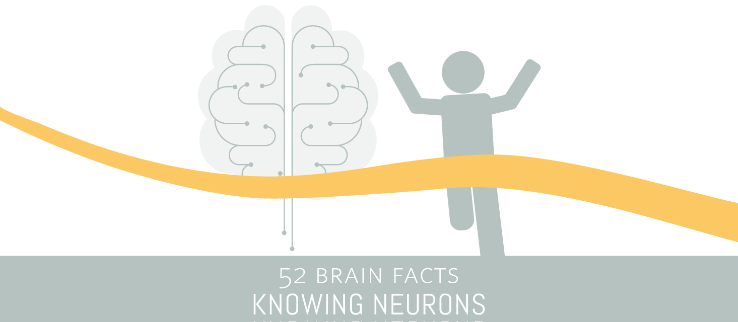 Myth or Fact? The capillaries of the brain are hundreds of miles long.