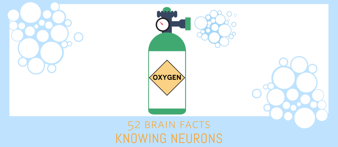 Myth or Fact? The brain's energy consumption is small compared to other organs.