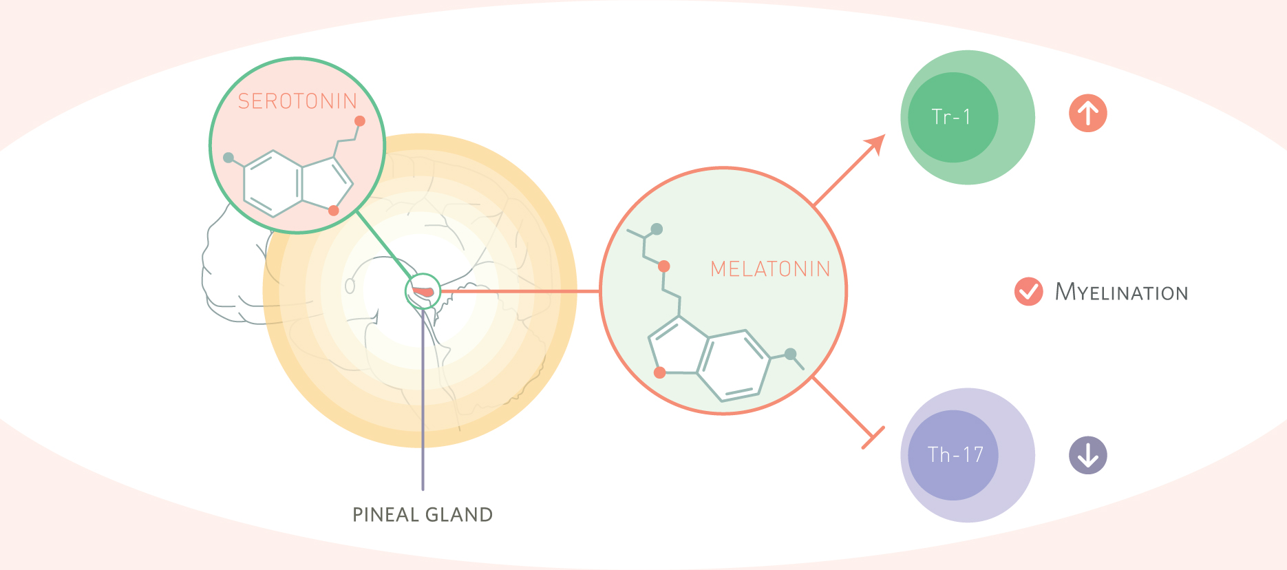 Melatonin: An Old Hormone with New Tricks