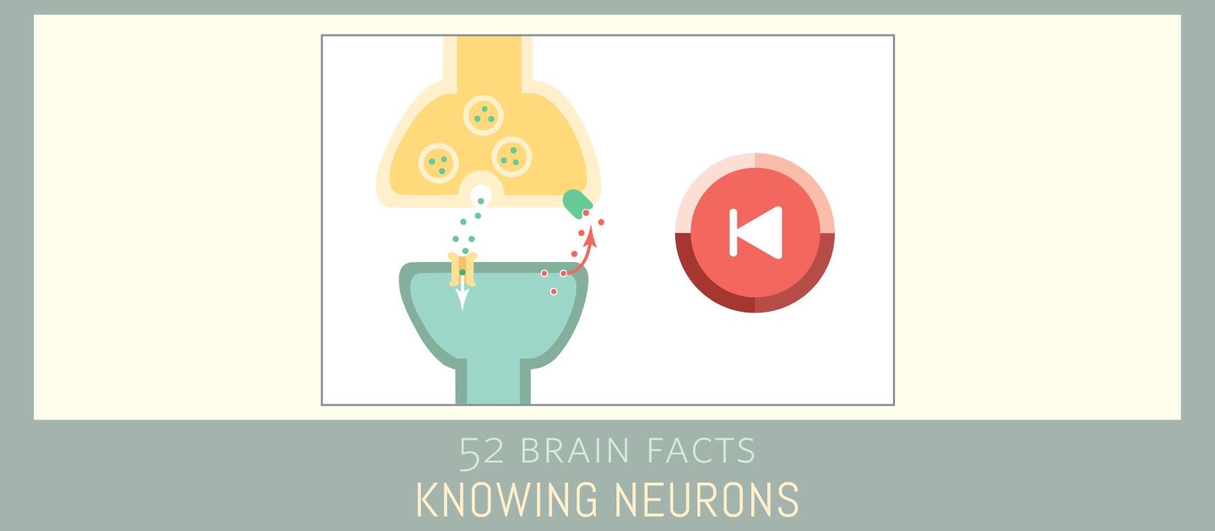 Myth or fact? Some neurotransmitters travel backwards across the synapse.
