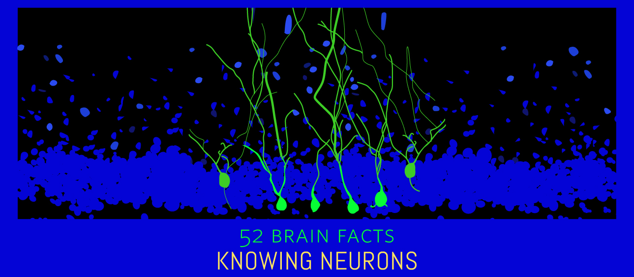 39_Neurogenesis_Cover_Knowing-Neurons
