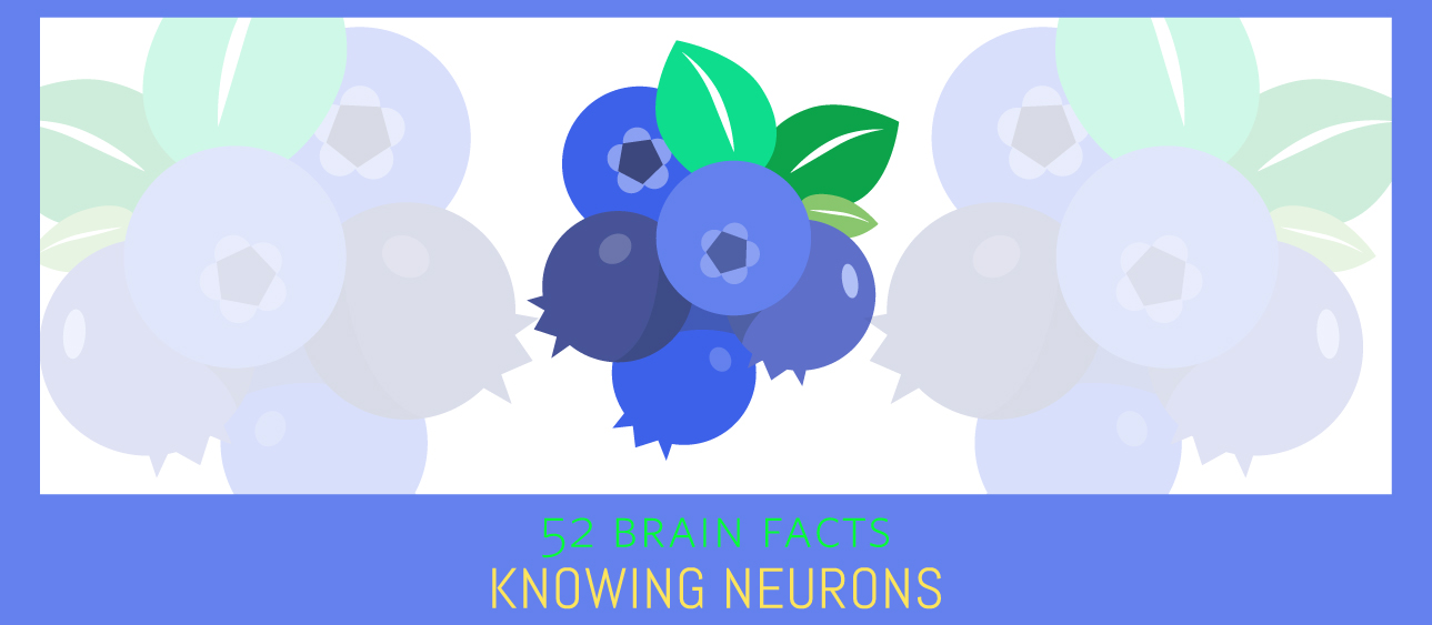 40_Blueberries_Cover_Knowing-Neurons