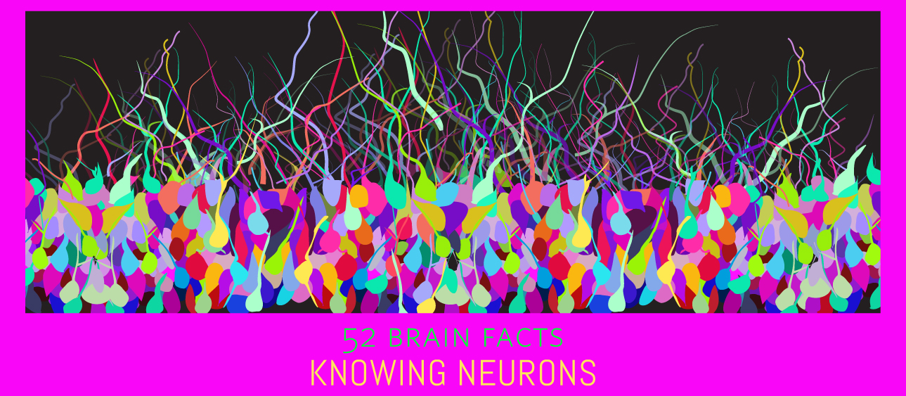 Myth or Fact? Neurons can be genetically engineered to come in all colors of the rainbow.