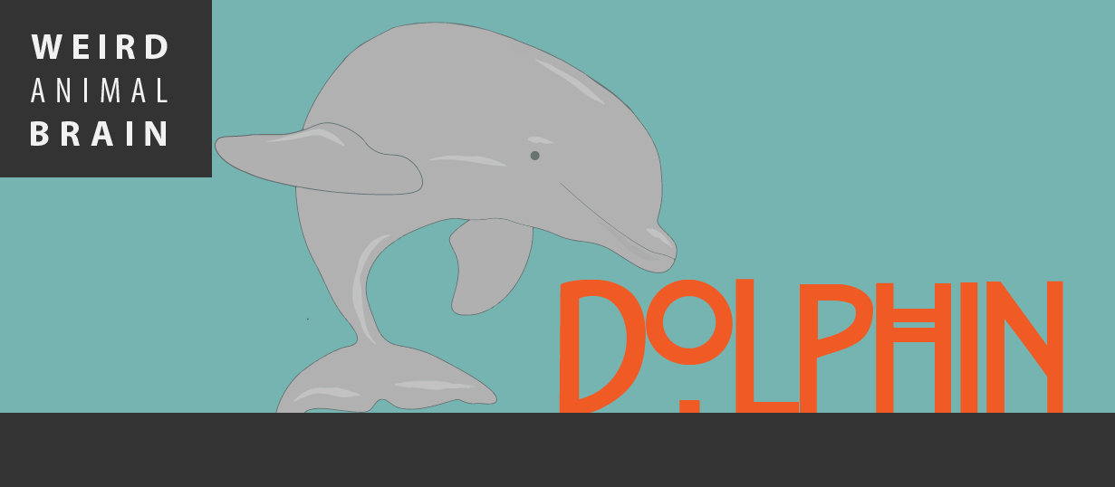 Weird animal brain: Bottlenose dolphin