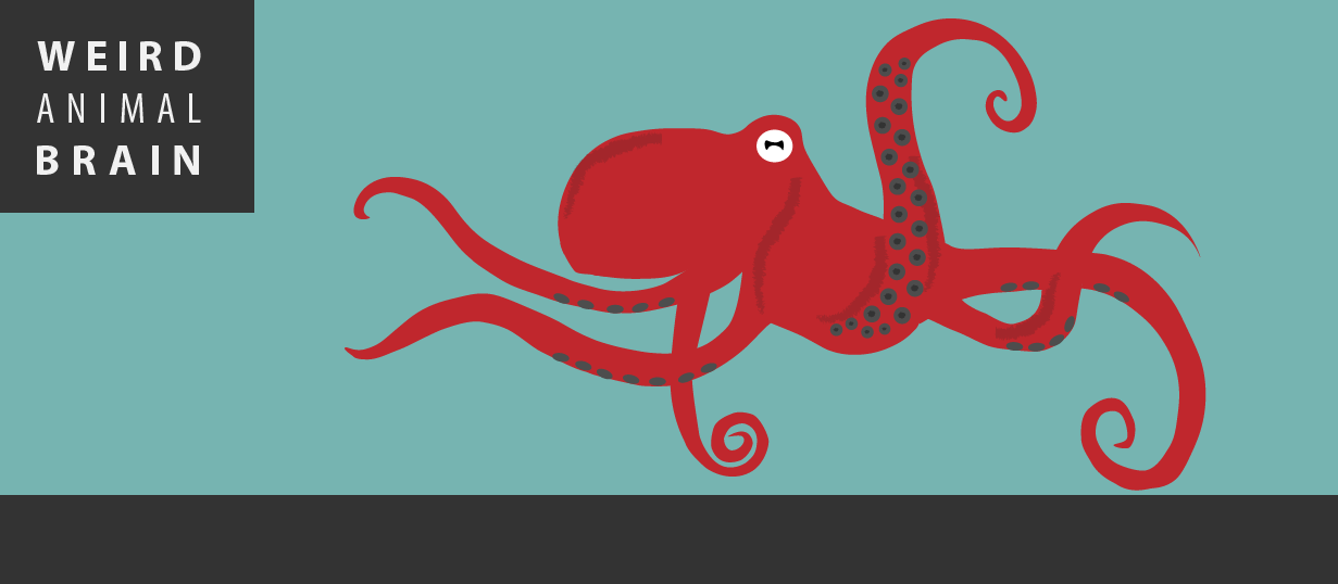 Weird Animal Brain: Octopus